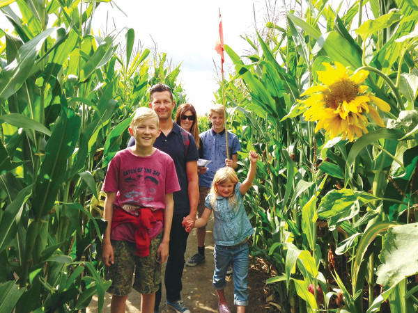 Tackle the Wistow Maze this Summer