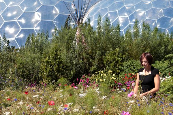 Wildflowers create a riot of colour at the Eden Project