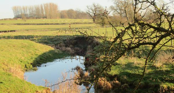 My Wistow Photo Competition 2013