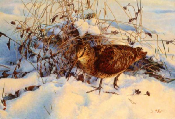 Jonathan Pointer, British game birds