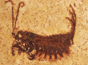 Ancient Frankenstein insect discovered
